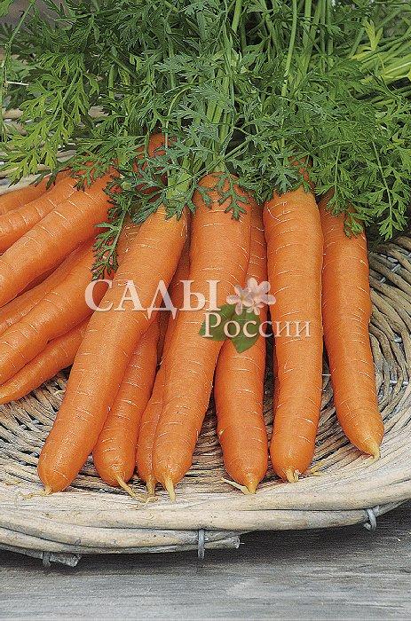 Морковь Белочка F1